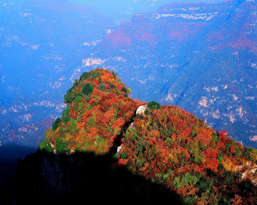 青天河靳家岭上看中原地区面积最大红叶群