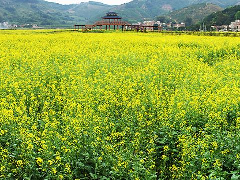 玉龙寨旅游景点图片