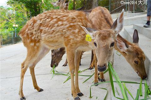 鹿回头旅游景点攻略图