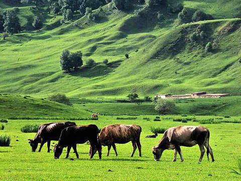 黑流滩大草原旅游景点图片