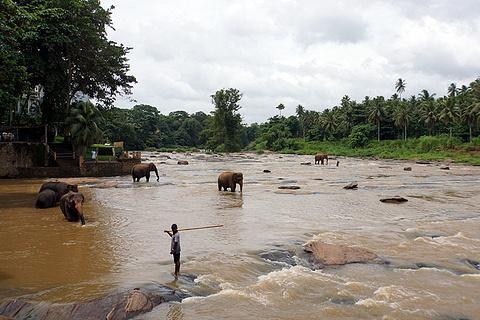品纳维拉大象孤儿院旅游景点攻略图
