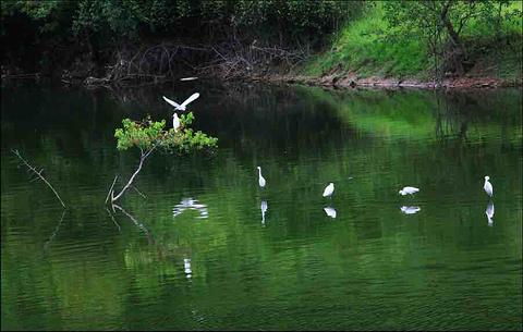 白鹭天堂旅游景点攻略图