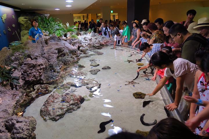 """""""体验还是很不错的_冲绳美丽海水族馆""""的评论图片"""