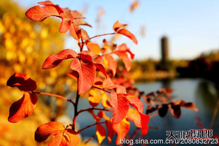 2018美丽的未名湖畔,五彩的树木姹紫嫣红,博雅塔的倒影在湛蓝的湖水中飘摇,绿色的草坪上撒满金黄的树叶 未名湖评论 去哪儿攻略社区图片