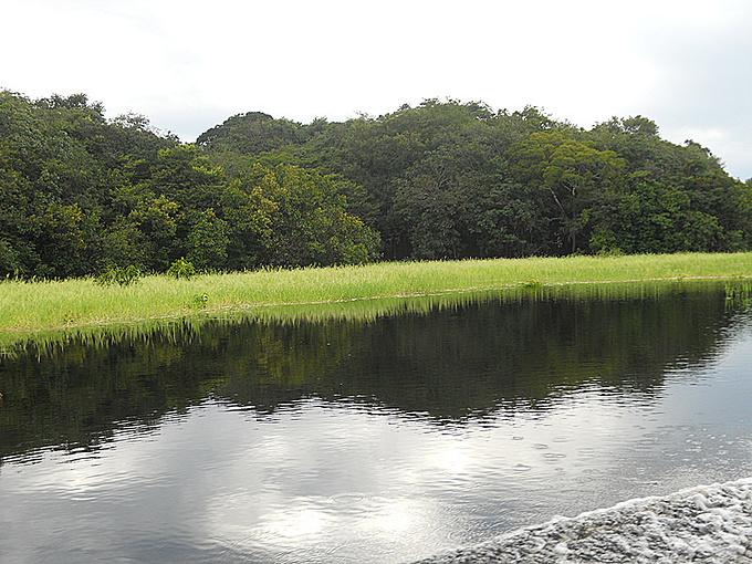 亚马逊热带雨林图片