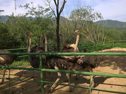八达岭野生动物世界旅游景点图片