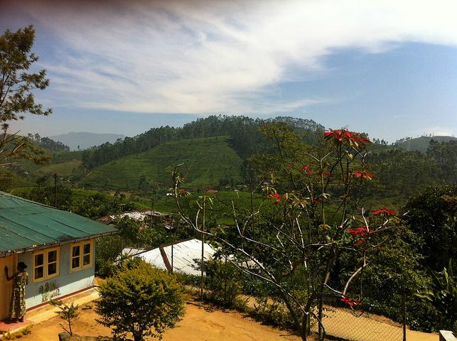 """""""这一路的风景特别美,路过的小山丘上都种满了茶,这一路上有许许多多的茶园。途中看到的茶女_茶园火车""""的评论图片"""