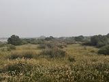 东营旅游景点攻略图片