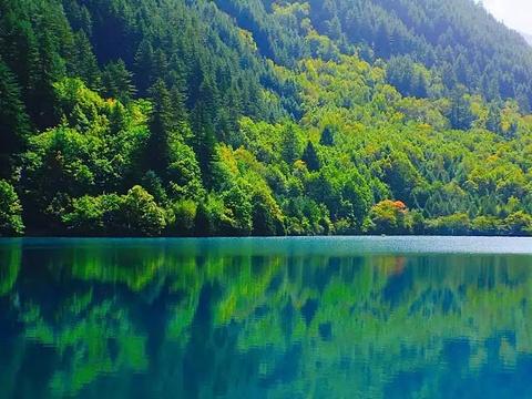 芦苇海旅游景点图片