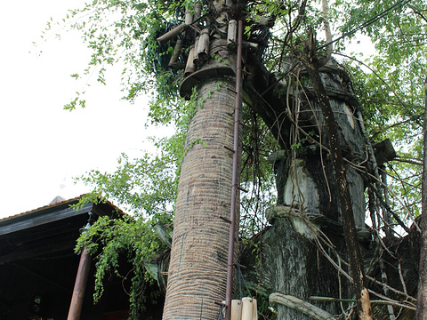 柬埔寨民俗文化村旅游景点图片