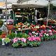 鲜花广场美食街