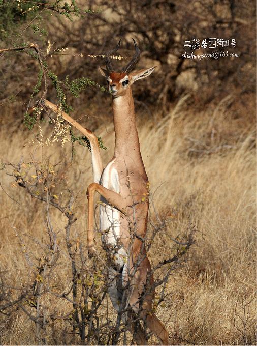 桑布鲁野生动物保护区图片