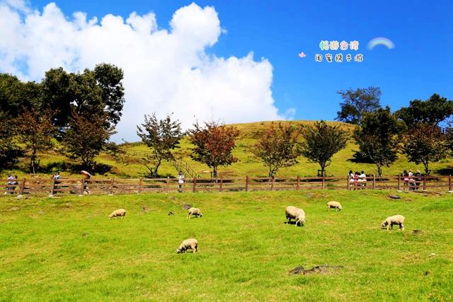 清境农场图片