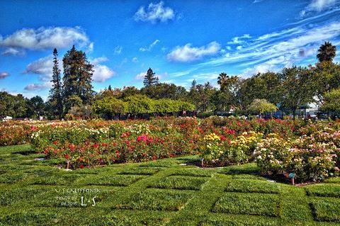 市立玫瑰园旅游景点攻略图