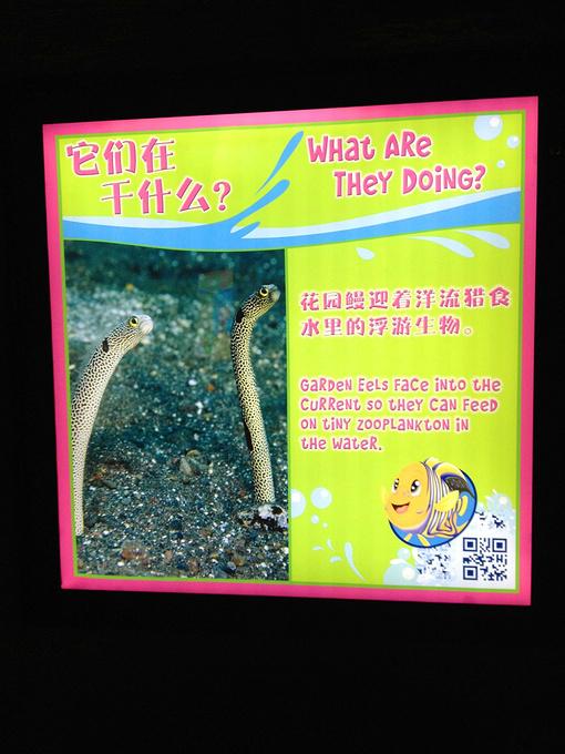 花园鳗图片
