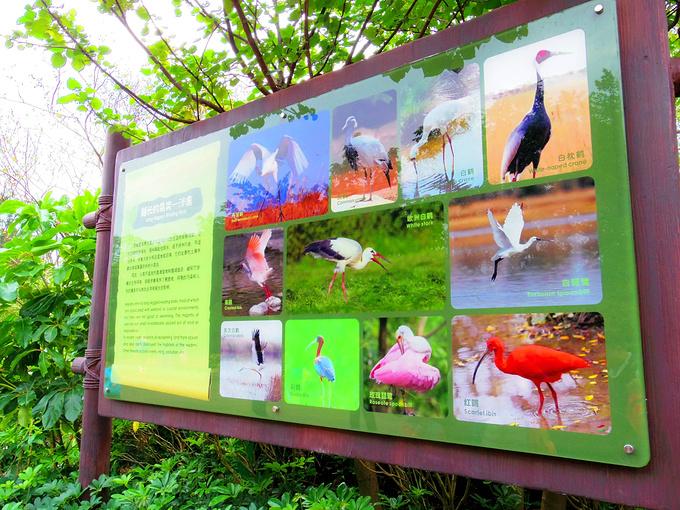 腿长的鸟类,白鹤图片