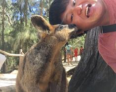 澳大利亚阿德莱德抱考拉喂袋鼠