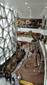 上海自然博物馆(静安新馆)旅游景点攻略图