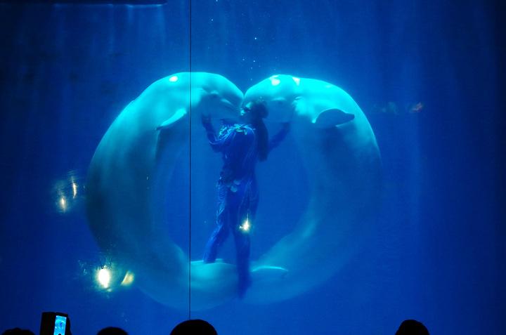"""""""很美的观赏点,鱼全围着中间的水柱游动,仿佛置身海洋。这北极熊跟我们互动玩的可开心了,太巨大了_哈尔滨极地馆""""的评论图片"""