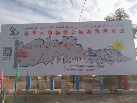 塔里木胡杨林公园旅游景点攻略图