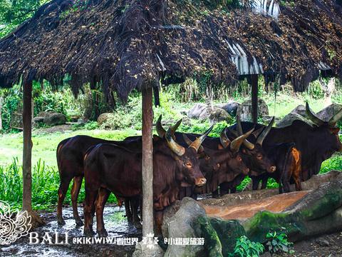 巴厘野生动物园旅游景点图片