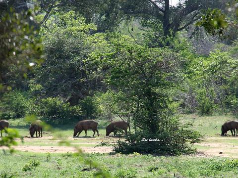 雅拉国家公园旅游景点图片