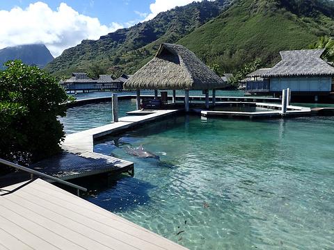 茉莉雅洲际海豚中心旅游景点图片