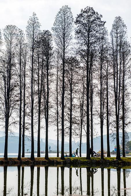 东湖梅园图片