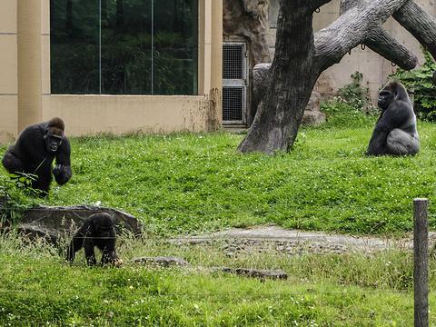 青岛森林野生动物世界旅游景点图片