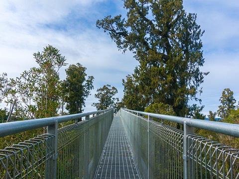 西海岸树梢漫步 West Coast Treetop Walk旅游景点图片