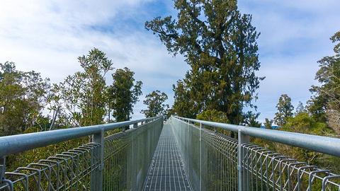 西海岸树梢漫步 West Coast Treetop Walk旅游景点攻略图