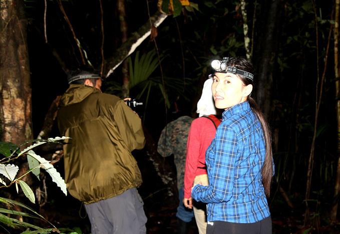 丛林 night walk图片
