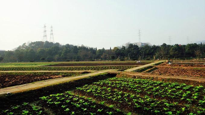 八卦田遗址公园图片