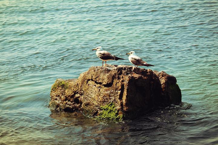 """""""海驴岛的神话传说也变得黯然失色,游客更多的目光聚集在与黑尾鸥的嬉戏玩耍,或惊叹于千万年来被海浪..._海驴岛""""的评论图片"""