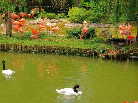 武汉动物园旅游景点图片