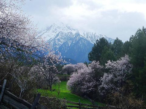 岗乡自然保护区旅游景点图片