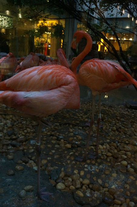 长隆酒店动物岛图片