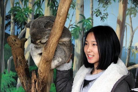墨尔本动物园旅游景点攻略图