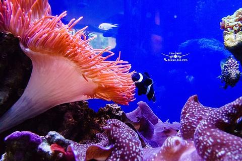 威基基水族馆旅游景点攻略图