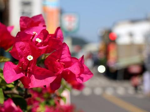 南庄老街旅游景点图片