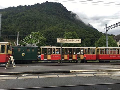 高山植物园旅游景点图片