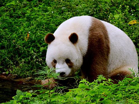 观音山大熊猫自然保护区旅游景点图片