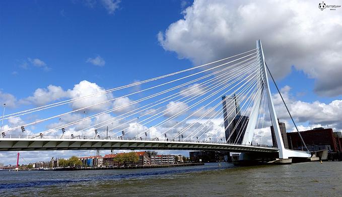 伊拉斯谟斯大桥图片