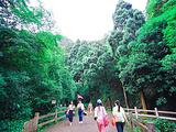 楠溪江旅游景点攻略图片