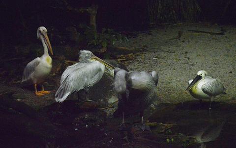 新加坡夜间野生动物园旅游景点攻略图