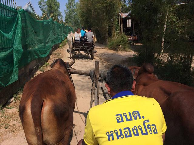 闲逛行程、小伙伴去大象训练营似乎就有意思得