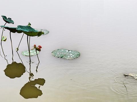 海珠湿地旅游景点图片