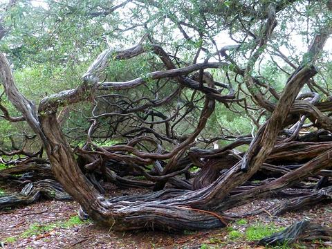 旧金山植物园旅游景点图片