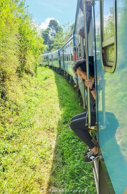 高山茶园火车图片