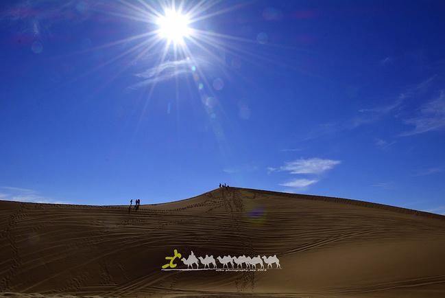 额济纳胡杨林自然保护区图片